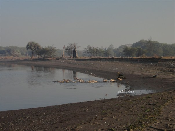 ekowisata mangrove baros kretek bantul (37)