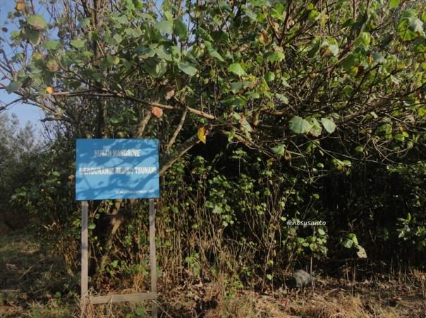 ekowisata mangrove baros kretek bantul (49)