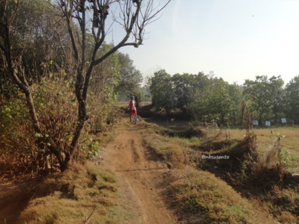 ekowisata mangrove baros kretek bantul (50)