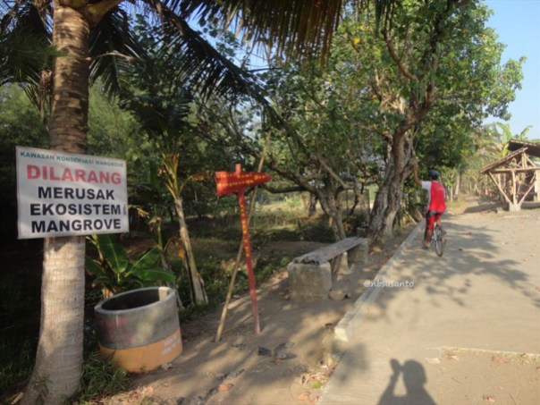 ekowisata mangrove baros kretek bantul (61)
