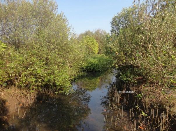 ekowisata mangrove baros kretek bantul (65)