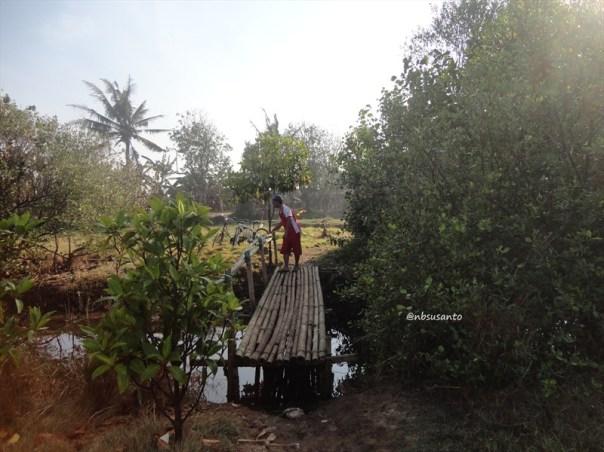 ekowisata mangrove baros kretek bantul (67)