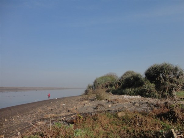 ekowisata mangrove baros kretek bantul (75)