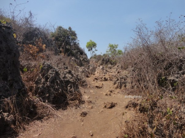 bukit puncak kosakora gunungkidul (12)