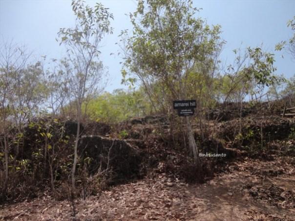 bukit puncak kosakora gunungkidul (8)