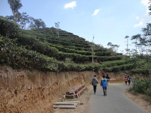kebun teh nglinggo kulon progo (14)