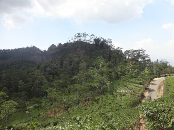 kebun teh nglinggo kulon progo (18)