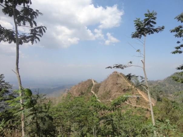 kebun teh nglinggo kulon progo (21)