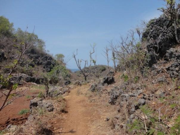 pantai ngrumput, gunungkidul (4)