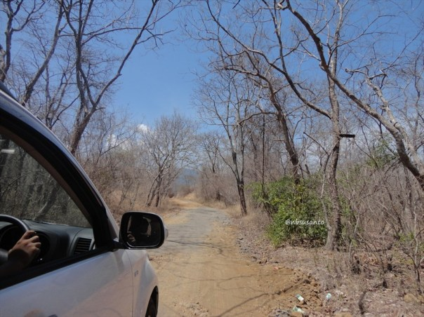 taman nasional baluran banyuwangi, afrika-nya pulau jawa (14)