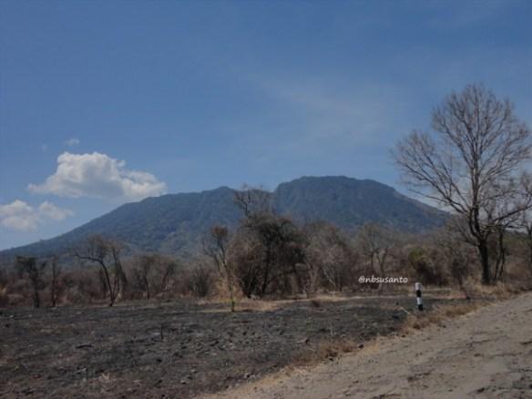 taman nasional baluran banyuwangi, afrika-nya pulau jawa (34)