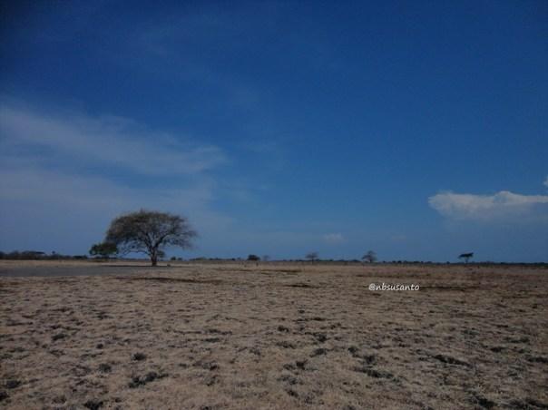 taman nasional baluran banyuwangi, afrika-nya pulau jawa (50)