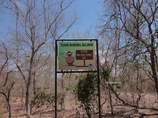 taman nasional baluran banyuwangi, afrika-nya pulau jawa (6)