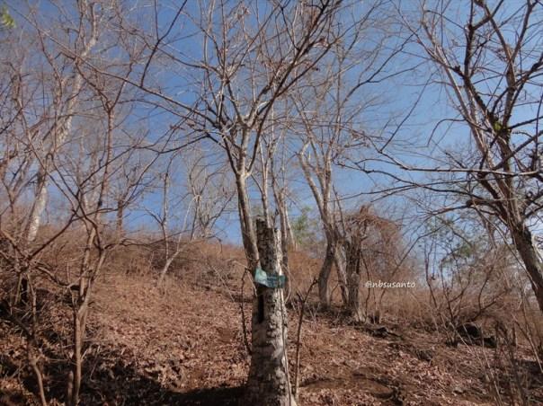taman nasional baluran banyuwangi, afrika-nya pulau jawa (69)
