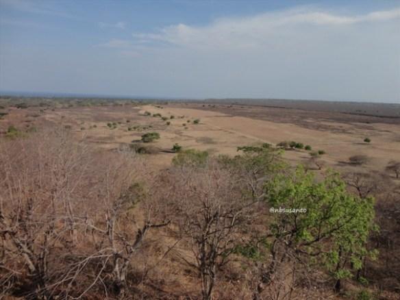 taman nasional baluran banyuwangi, afrika-nya pulau jawa (72)