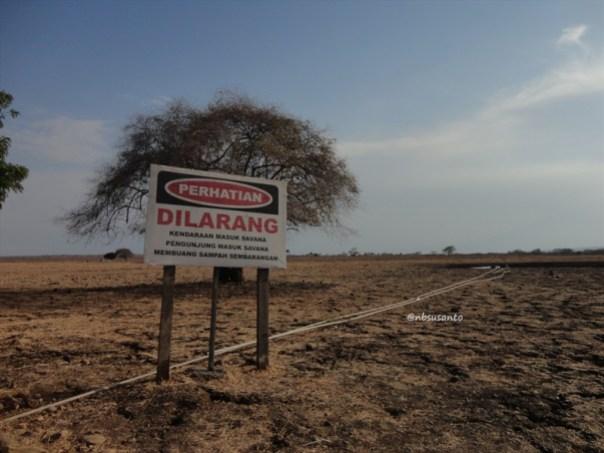 taman nasional baluran banyuwangi, afrika-nya pulau jawa (89)
