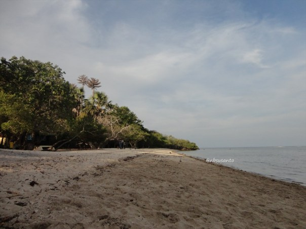pantai bama, spot menarik lain di taman nasional baluran banyuwangi (14)