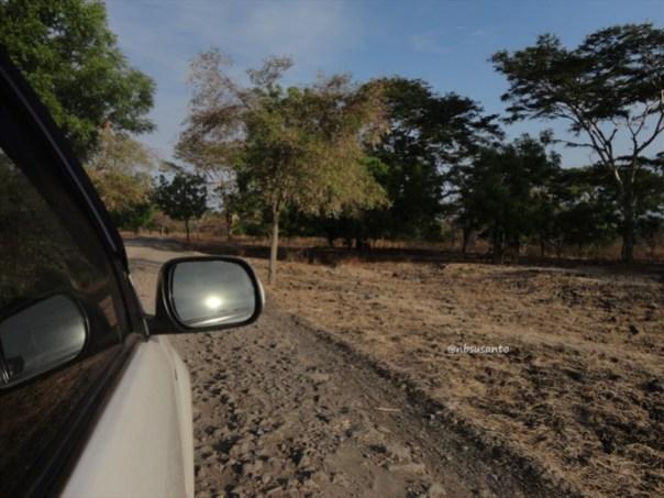 pantai bama, spot menarik lain di taman nasional baluran banyuwangi (2)