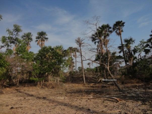pantai bama, spot menarik lain di taman nasional baluran banyuwangi (3)