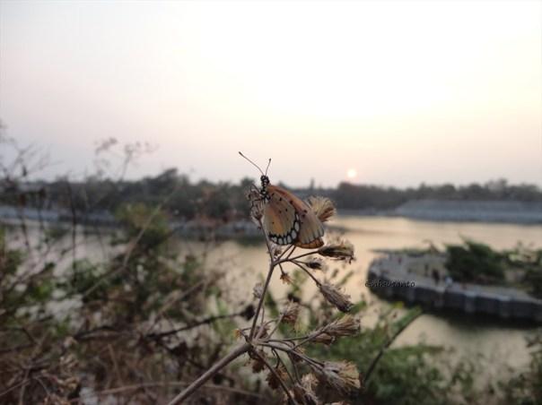 macro, sunset dan embung tambakboyo (14)