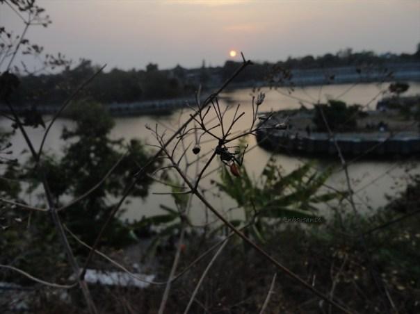 macro, sunset dan embung tambakboyo (17)