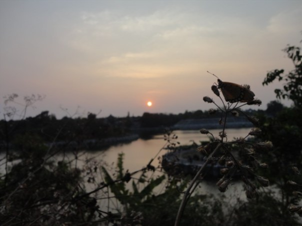 macro, sunset dan embung tambakboyo (9)