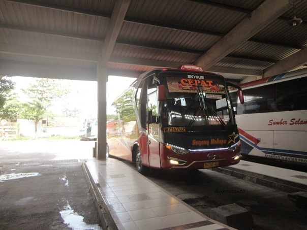 Sugeng Rahayu Golden Star Cepat Laksana All New Legacy Skybus W 7147 UZ