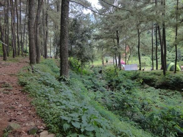 curug nangka taman nasional gunung halimun salak bogor (12)