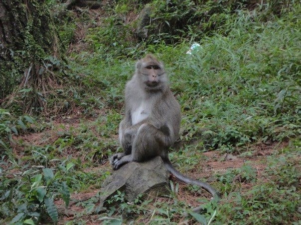 curug nangka taman nasional gunung halimun salak bogor (15)