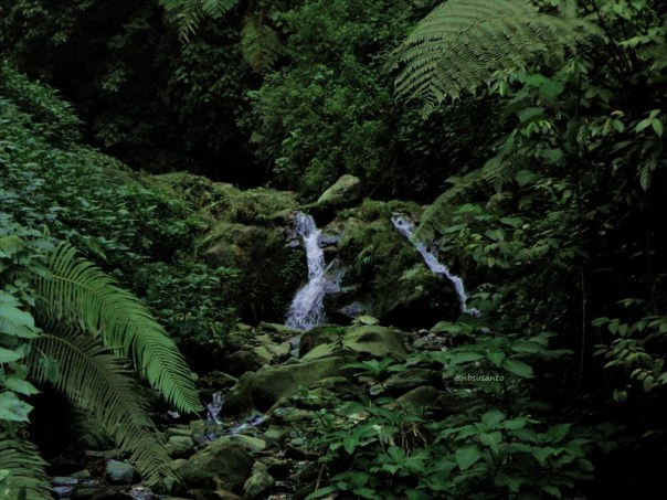 curug nangka taman nasional gunung halimun salak bogor (191)